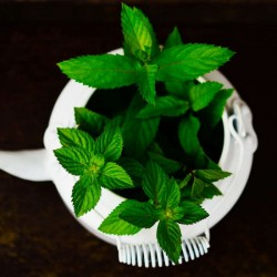 PEPPERMINT (MENTHA...